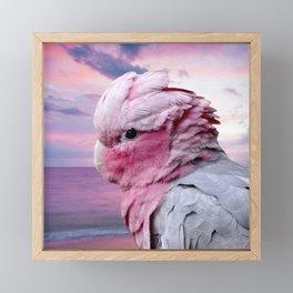 Galah Cockatoo Framed Mini Art Print
