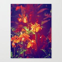 Sun Kissed Maroon Canvas Print