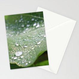 Fresh Nasturtium Stationery Cards