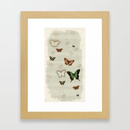Butterfly Coordinates iii Framed Art Print
