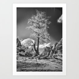 Infrared Tree In The Wind Art Print