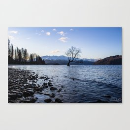 Lone tree in Lake Wanaka Canvas Print