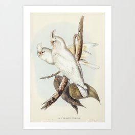 Blood-stained Cockatoo (Cacatua sanguinca) illustrated by Elizabeth Gould (1804–1841) for John Gould Art Print