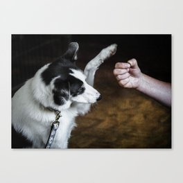 Border Collie with treat Canvas Print