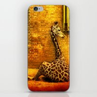 giraffes iPhone & iPod Skins featuring Giraffes by LudaNayvelt