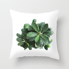 The green leaf of the Euphorbia Throw Pillow