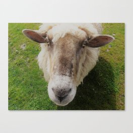 Splodge Canvas Print