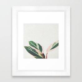 Pink Leaves III Framed Art Print