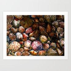 Shell 1 Art Print