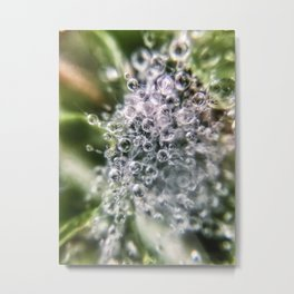 Dew Burst Metal Print