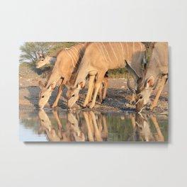 Kudu Antelope - Reflection of Peace Metal Print