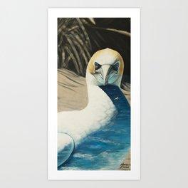 Gannet Art Print