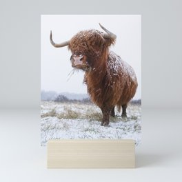 Scottish Highland cow in the snow Mini Art Print