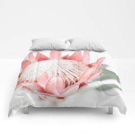 King Protea III Comforters