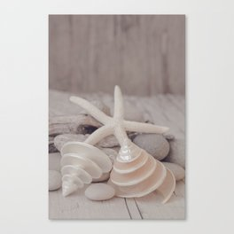 Beach Still Life With Shells And Starfish Canvas Print