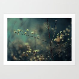 blossom. Art Print