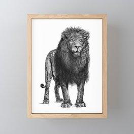 Lion Framed Mini Art Print