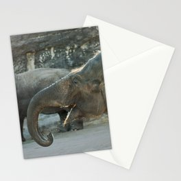 Indian Elephant, San Antonio Zoo Stationery Cards