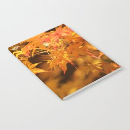 Colorful Japanese Maple Leaves In Fall Photography Notebook