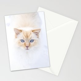 White ragdoll cat with blue eyes in snow, looking in camera Stationery Cards
