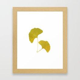 Ginkgo Leaves... Framed Art Print