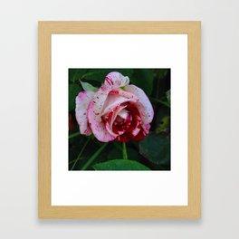 Blood & Milk Rose Framed Art Print