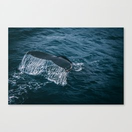 Whale Tail Emerging from the Ocean Canvas Print