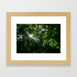 Sunshine Through Leaves Framed Art Print