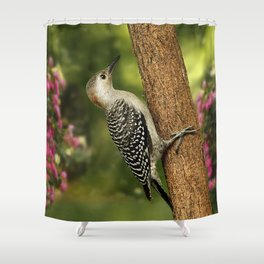 Juvenile Red Bellied Woodpecker Shower Curtain