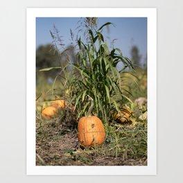 Pumpkin sitting against corn Art Print
