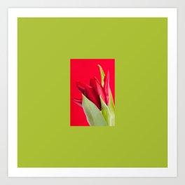 Gracile single red tulip flower head Art Print