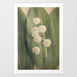 Scents of Spring - Lily of the Valley iii Art Print