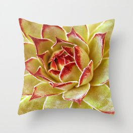Suculenta Throw Pillow