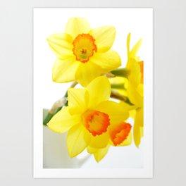 narcissus flowers Art Print