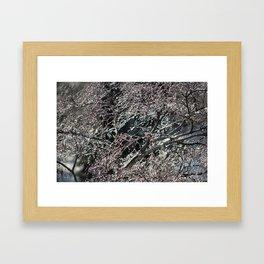 Iced Tree: Take Two Framed Art Print
