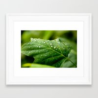sprinkles Framed Art Prints featuring Sprinkles by Bill Nash