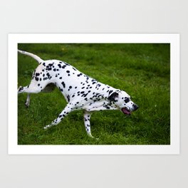 Flying Dog. Kokkie. Dalmatian Art Print