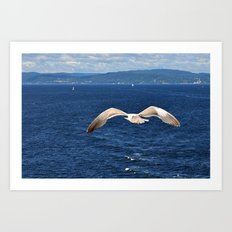 seagull with landscape Art Print