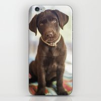 labrador iPhone & iPod Skins featuring Labrador Love by rusticedenphotography