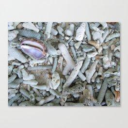 Vanuatu - coral remains Canvas Print