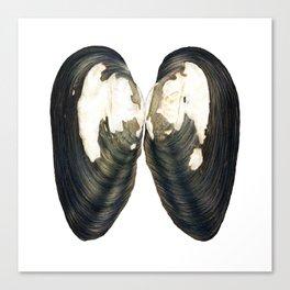 Thick Shelled River Mussel (Unio crassus) Canvas Print