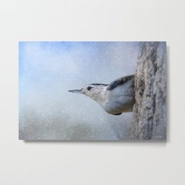 Nuthatch In The Snow Metal Print