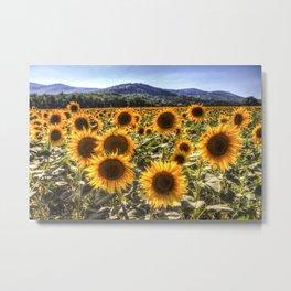 The Sunflower Summer Metal Print
