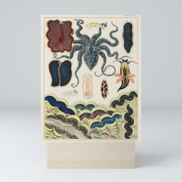 Barrier Reef Molluscs and Planarians from The Great Barrier Reef of Australia (1893) by William Savi Mini Art Print