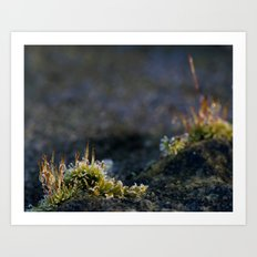 Frosty Moss 2 Art Print