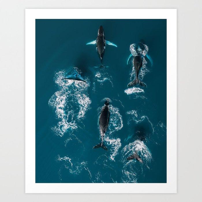 Humpback whales in the arctic ocean - Wildlife Aerial Kunstdrucke