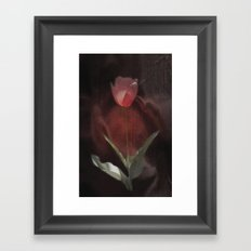 silk tulip Framed Art Print