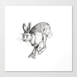 Hare 3 Canvas Print