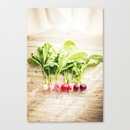 The Gardener's Kitchen: Red Radishes Canvas Print