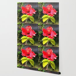Beautiful Red Tropical Hibiscus Flower Wallpaper